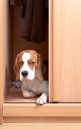 How To Make Your Apartment Pet-friendly