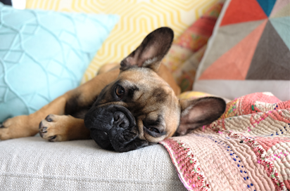The Best Dog Breeds to Own in an Apartment Home